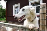 Naujos sodybos Saulėtas Bebras nuoma poilsiui, renginiams, vestuvėms prie Trakų - 11