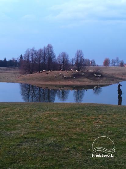 Sodyba Raganynė Kelmės rajone, Tytuvėnuose, netoli Giliaus ežero - 14
