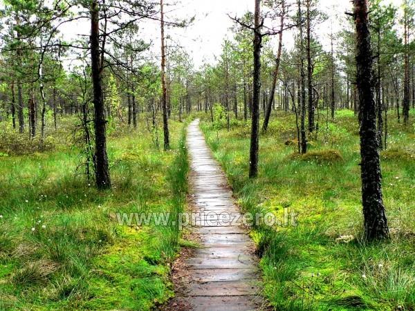 Sodyba Dzūkijos uoga šalia Druskininkų, prie Viršurodukio upelio ir tvenkinio - 37
