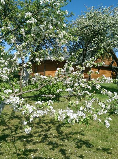 Adomėnų sodyba - ramus, medžiais apsuptas vienkiemis Miškiškėse - 30