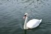 Sodyba 5 km nuo Trakų ant ežero kranto poilsiui ir šventėms: pirtis, salė, kambariai - 21