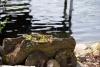 Sodyba 5 km nuo Trakų ant ežero kranto poilsiui ir šventėms: pirtis, salė, kambariai - 20