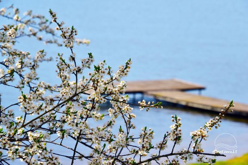 """Sodyba, namelių nuoma """"Gandrė"""" ant Guosto ežero kranto - 16"""