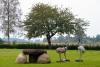 Kaimo turizmo sodyba Skuodo rajone Gervių gūžta prie Šventosios žemupio - 1