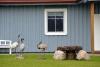 Kaimo turizmo sodyba Skuodo rajone Gervių gūžta prie Šventosios žemupio - 12