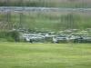 Nauja sodyba Maudutis Plateliuose ant Maudučio ežero kranto - 34