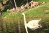 Sodyba prie ILgio ežero: teniso kortai, baidarės, valtys, krepšinis, tinklinis, pirtis - 10