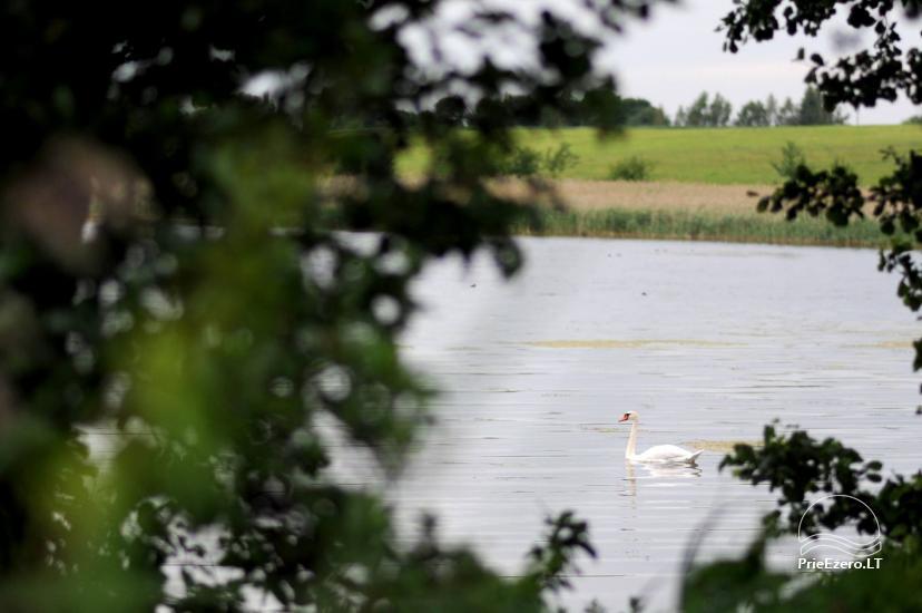 """Sodyba ant ežero kranto Alytaus rajone """"Atesys"""" – šventėms, renginiams, poilsiui - 57"""
