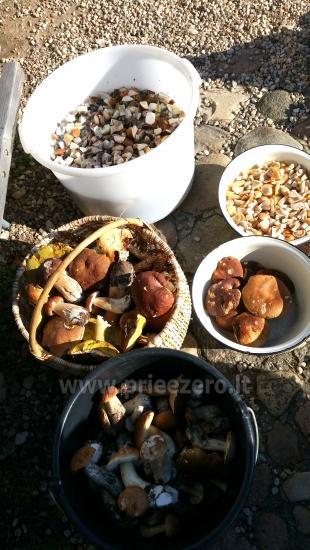 Poilsio sodyba prie Luodžio ežero šventėms, poilsiui, žvejybai! - 6
