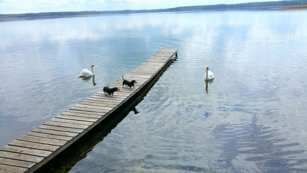 Poilsio sodyba prie Luodžio ežero šventėms, poilsiui, žvejybai! - 4