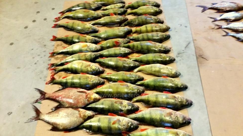 Poilsio sodyba prie Luodžio ežero šventėms, poilsiui, žvejybai! - 5