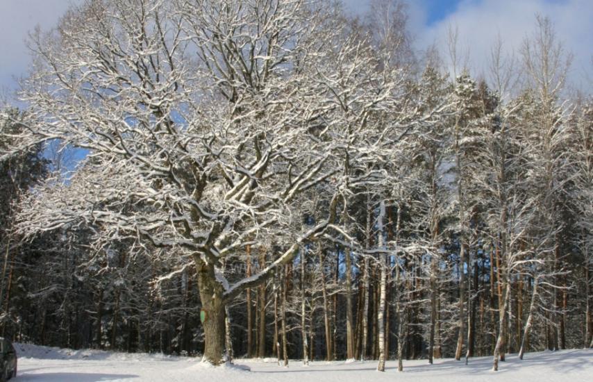 Kaimo turizmo sodyba Auksinis ąžuolas miško apsuptyje visai šalia Vilniaus - 17