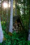 Miško rojus - namelis virš vandens - 9