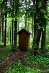 Miško rojus - namelis virš vandens - 11