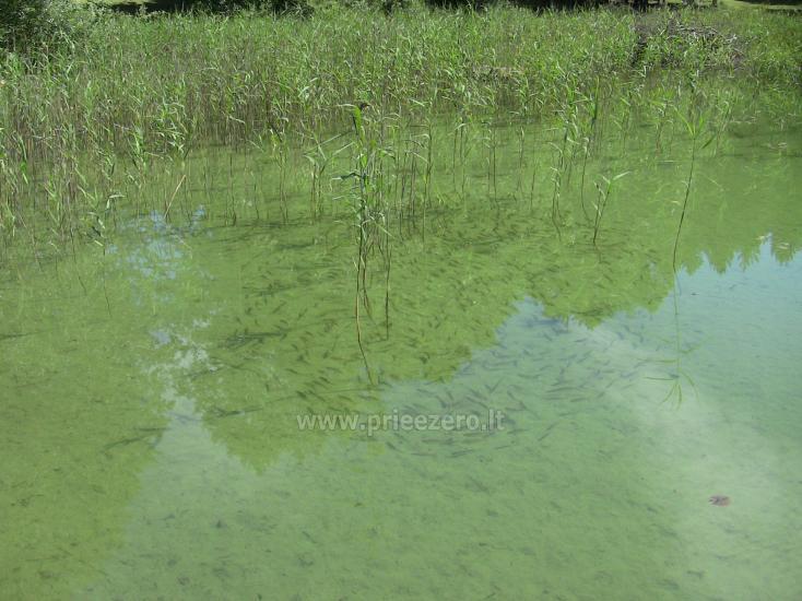 Namelis Sapiegiškių kaime, ant Seliovinio ežero kranto - 23