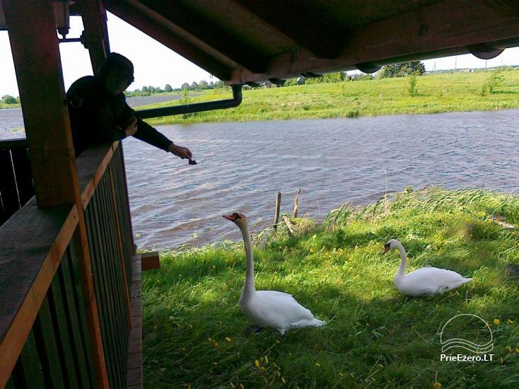 Sodybos nuoma Jurbarko rajone su nedideliu ežeru kieme - 10