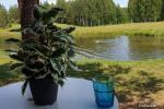 Mileikių sodyba Vilniaus rajone: pirtis, kubilas, nakvynė, pramogos - 7