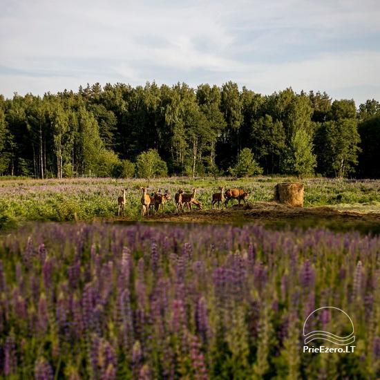 Elnių ūkis ir palapinių stovyklavietė Deer SPA prie Kernavės - 4