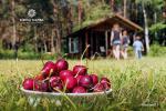 Survilų sodyba prie Šveicarijos tvenkinio: apgyvendinimas, futbolo golfas, disko golfas, kopimo uola, basakojų takas - 11