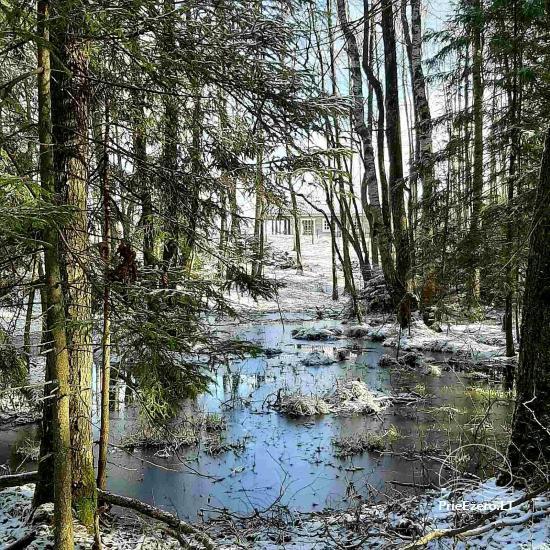 Aviečių vila - Naujas ir jaukus namas laukinėje gamtoje šalia miško - 29