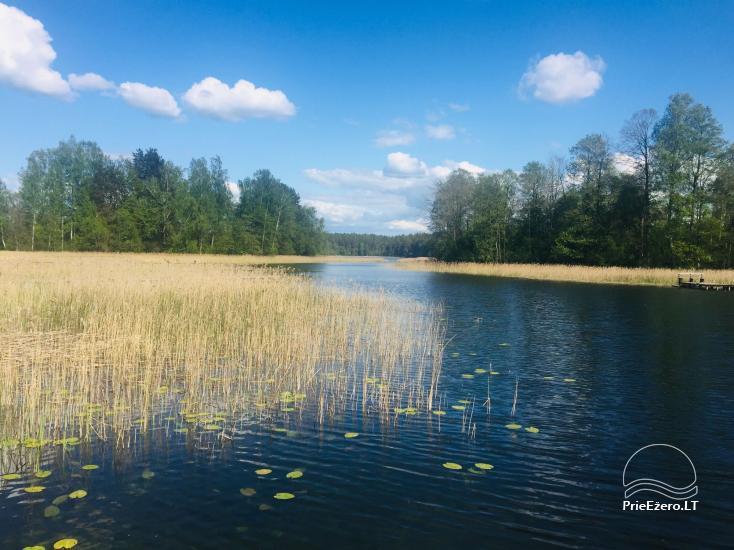 Reginos Maksimovienės sodyba prie Srovinaičio ežero - 10