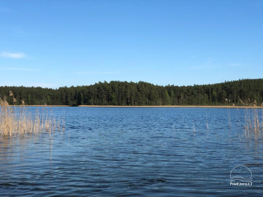 Reginos Maksimovienės sodyba prie Srovinaičio ežero - 4