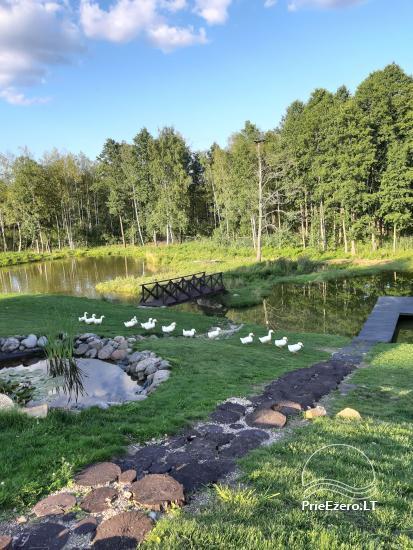 Sodyba prie Ilmėdo ežero – Namas, pirtis, kubilas - 31