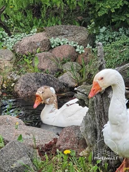 Sodyba prie Ilmėdo ežero – Namas, pirtis, kubilas - 35