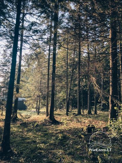 Maža ir kokybiška poilsio oazė miško apsuptyje - 2
