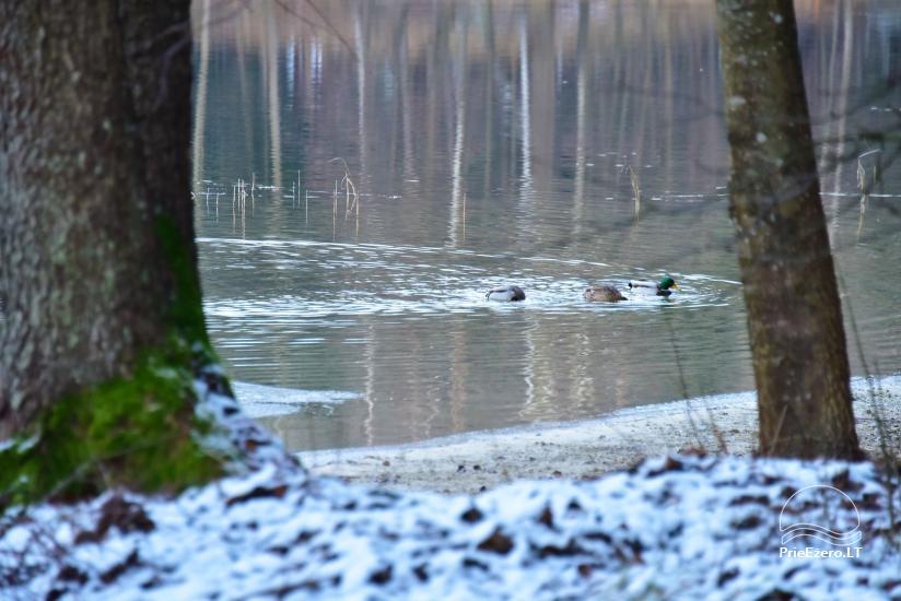 """""""Medaus pirtelė""""– 2-4 žm. prie ežero Trakų raj. - 34"""