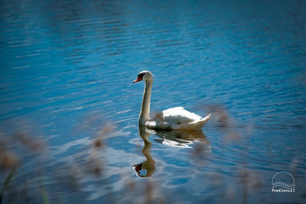 Sodyba VieniKrante ramiam poros ar šeimos poilsiui ant ežero kranto - 13