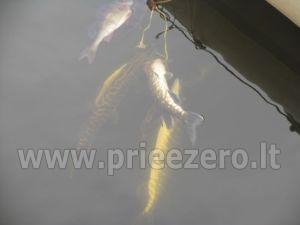 Žvejyba ežere