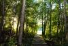 Žiežulinio sodyba prie ežero Ignalinos rajone: pirtis, kubilas, nakvynė - 18