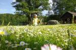 Sodyba Akmendvaris 10 km už Trakų, salė - iki 80 žmonių, apgyvendiname iki 70, Pirtis - 2