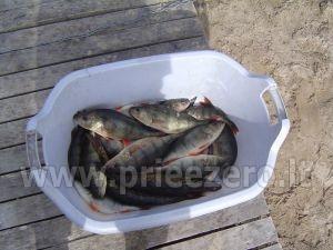 Žvejyba privačiame ežero, sodyboje SILVESTRO DVARAS - 2