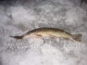 Žvejyba privačiame ežero, sodyboje SILVESTRO DVARAS - 9