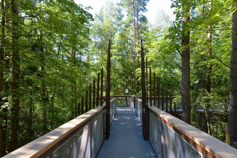 Anykščių šilelio medžių lajų takas - 3