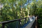 Anykščių šilelio medžių lajų takas - 5