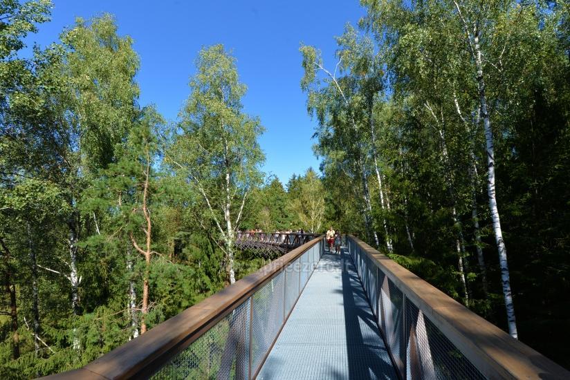 Anykščių šilelio medžių lajų takas - 9
