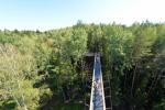 Anykščių šilelio medžių lajų takas - 10