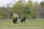 Jojimas žirgais Ventspilio rajone svečių namuose prie Ventos upės Ventaskrasti - 2