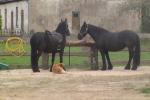 Jojimas žirgais Ventspilio rajone svečių namuose prie Ventos upės Ventaskrasti - 4