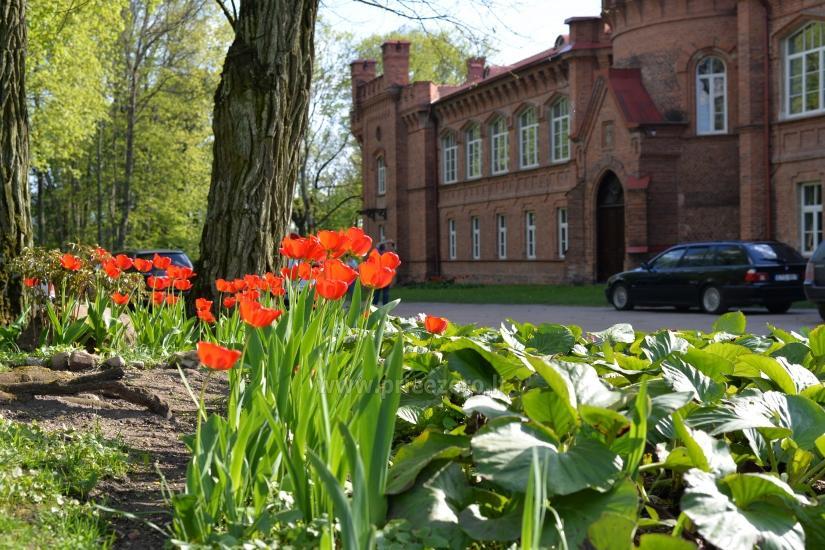 Raudonės pilis ir pilies parkas - 11