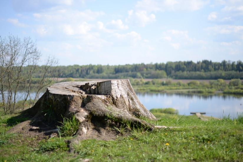 Veliuonos piliakalniai Jurbarko rajone - 14