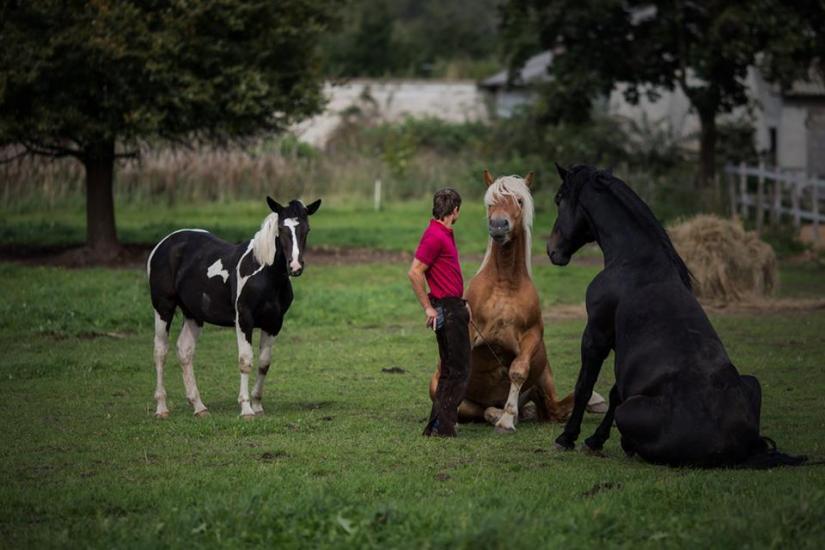 Žirgo ir žmogaus draugystė, jojimo pamokos, žirgų apjojimas ir dresūra - 2