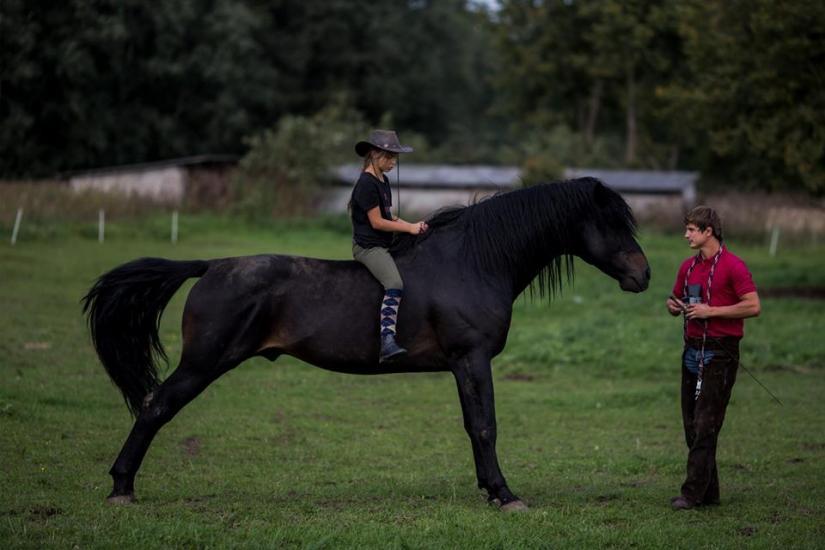 Žirgo ir žmogaus draugystė, jojimo pamokos, žirgų apjojimas ir dresūra - 4
