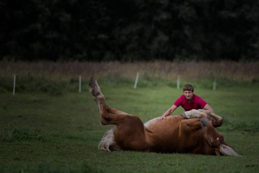 Žirgo ir žmogaus draugystė, jojimo pamokos, žirgų apjojimas ir dresūra - 5