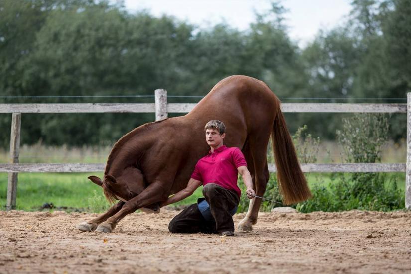 Žirgo ir žmogaus draugystė, jojimo pamokos, žirgų apjojimas ir dresūra - 7