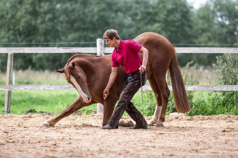 Žirgo ir žmogaus draugystė, jojimo pamokos, žirgų apjojimas ir dresūra - 8