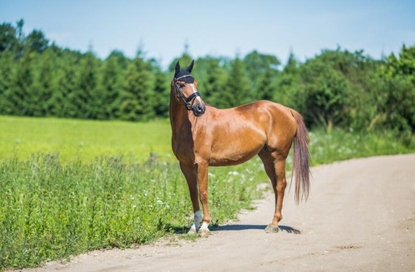 Žirgo ir žmogaus draugystė, jojimo pamokos, žirgų apjojimas ir dresūra - 11